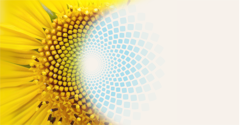 Sunflower-Background